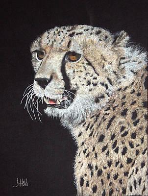 Cheetah Drawing - Cheetah Glory by John Hebb