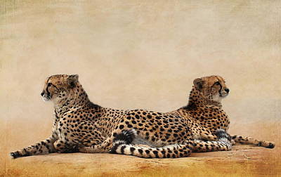 Cheetah Mixed Media - Cheetah by Heike Hultsch