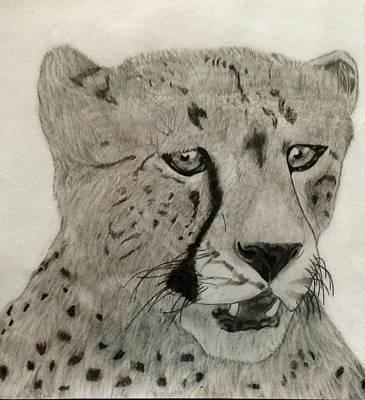 Drawing - Cheetah II by Noah Burdett