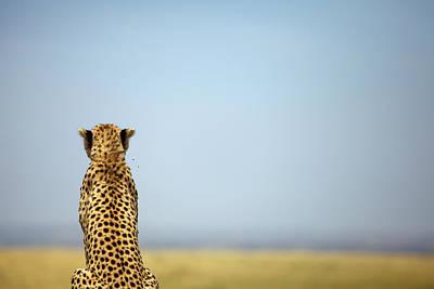 Photograph - Cheetah, Maasai Mara by Heinrich Van Den Berg