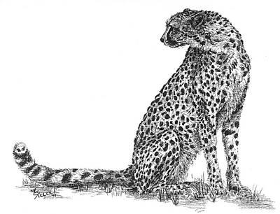 Cheetah Original