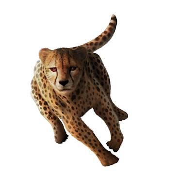 Cheetah Art Print by Mark Garlick