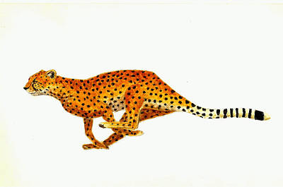 Cheetah Painting - Cheetah by Michael Vigliotti
