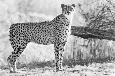 Cheetah Digital Art - Cheetah On The Lookout-three by David Allen Pierson