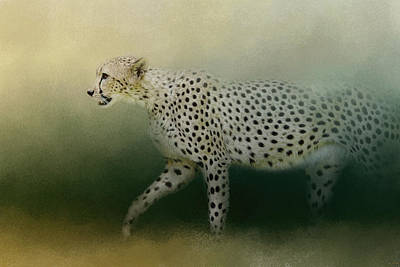 Photograph - Cheetah On The Prowl by Jai Johnson