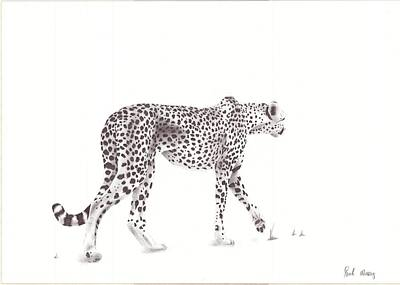 Cheetah Drawing - Cheetah by Paul Murray
