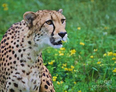 Digital Art - Cheetah Portrait by Mike Mulick