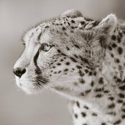 Cheetah Portrait Art Print by Regina Mueller