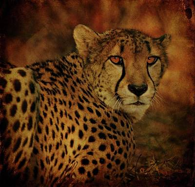 Wild Cats Digital Art - Cheetah by Sandy Keeton