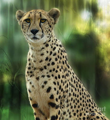 Cheetah Spots Art Print
