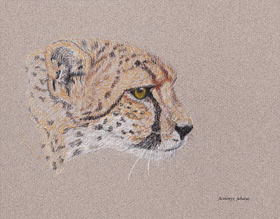 Drawings Royalty Free Images - Cheetah Royalty-Free Image by Stephanie Grant