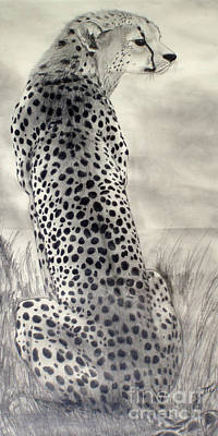 Drawing - Cheetah by Suzette Kallen