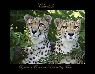 Photograph - Cheetah Symbol Of by Marty Maynard