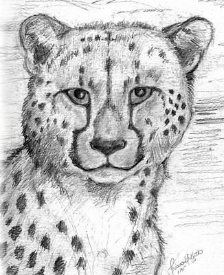 Cheetah Drawing - Cheetah by Tricia Griffith