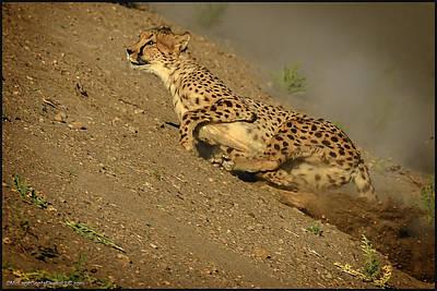 Cheetah Photograph - Cheetah Up Hill Race by LeeAnn McLaneGoetz McLaneGoetzStudioLLCcom