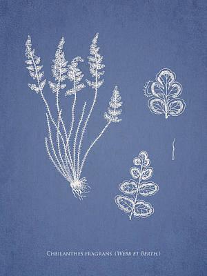 Cheilanthes Fragrans Art Print
