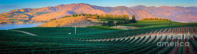 Vines Photograph - Chelan Vineyard Panorama by Inge Johnsson