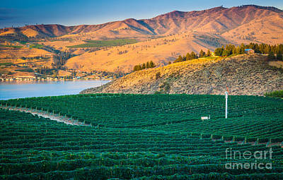 Grape Leaves Photograph - Chelan Vineyard Sunset by Inge Johnsson