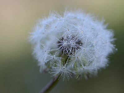 Photograph - Cherish The Dew by Fraida Gutovich