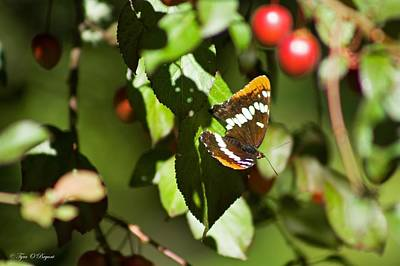 Photograph - Cherries And Butterflies by Tyra  OBryant