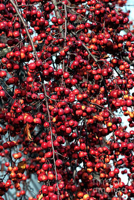 Photograph - Cherries by John Rizzuto