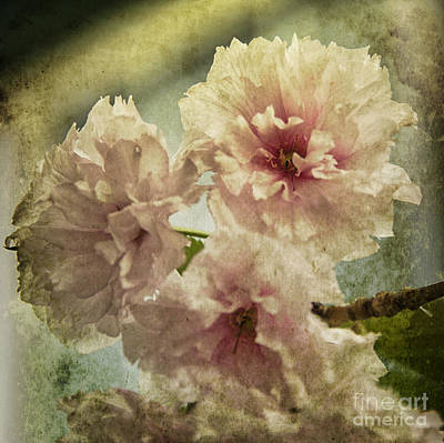 Surrealism Royalty-Free and Rights-Managed Images - Cherries Jubilee by Terry Rowe
