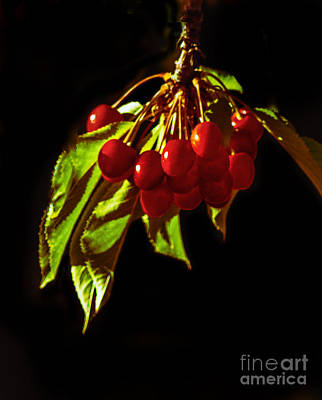 Photograph - Cherries by Robert Bales