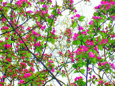 Digital Art - 'cherry Blossom Abstract'  by Liza Dey