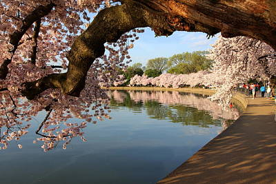 Photograph - Cherry Blossom Arch by Anne Barkley