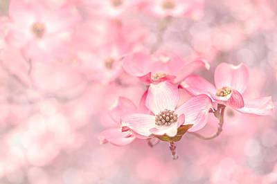 Dogwood Blossom Photograph - Pink Dogwood Blossoms by Debi Bishop