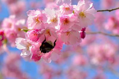 Cherry Blossom Branch  Original by Tommytechno Sweden