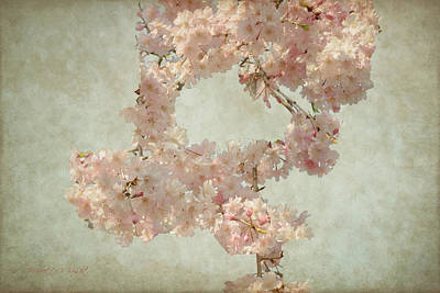 Photograph - Cherry Blossom Bridal Bouquet by Paulette B Wright