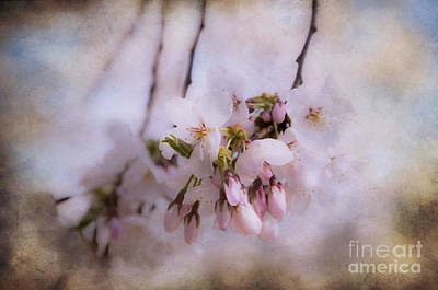 Surrealism Royalty-Free and Rights-Managed Images - Cherry Blossom Dreams by Terry Rowe
