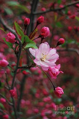 Art Print featuring the photograph Cherry Blossom by Eva Kaufman