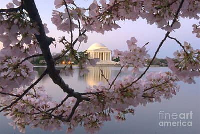 Photograph - Cherry Blossom Festival   Dc by Willie Harper