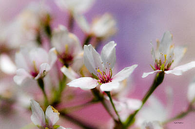 Photograph - Cherry Blossom Flower by Crystal Wightman