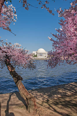 Photograph - Cherry Blossom In Dc by Mary Almond
