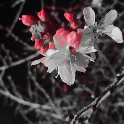 Photograph - Cherry Blossom In The Dark by Wes Ball