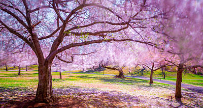 Photograph - Cherry Blossom In The Wind by Mark Robert Rogers