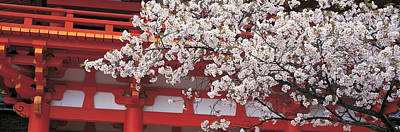 Cherry Blossoms Photograph - Cherry Blossom Kamigamo Shrine Kyoto by Panoramic Images