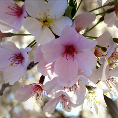 Cherry Blossoms Digital Art - Cherry Blossom by Roleen  Senic