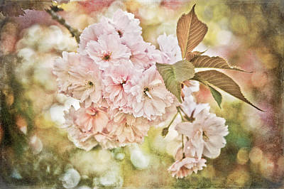 Cherry Blossom Art Print by Loriental Photography