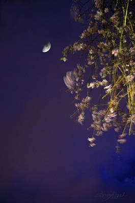 Photograph - Cherry Blossom Moon by Sharon Popek