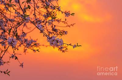 Dreamy Pink Park Scene Photograph - Cherry Blossom Over Orange Sunset by Anna Om