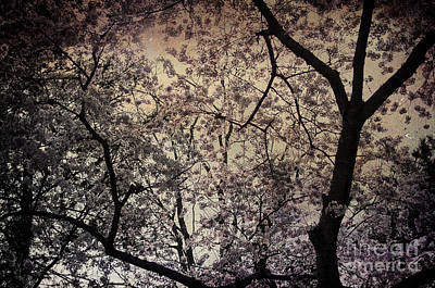 Photograph - Cherry Blossom Sky by Terry Rowe