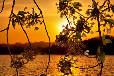 Print featuring the photograph Cherry Blossom Sunset by Mitchell R Grosky