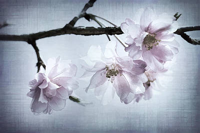 Cherry Blossom Sweetness Art Print by Kathy Clark