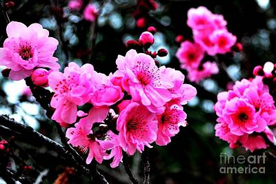 Photograph - Cherry Blossom by Third Eye Perspectives Photographic Fine Art