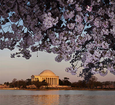 Jefferson Memorial Wall Art - Photograph - Cherry Blossom Tree With A Memorial by Panoramic Images
