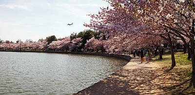 Cherry Blossom Trees At Tidal Basin Art Print